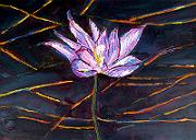 Kakadu Water Lily