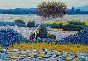 Burren Tree, County Clare