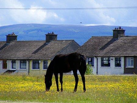 A horse in Ballyfermot