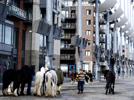 Horses leaving the Smithfield market in Dublin's city centre