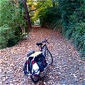 Xtracycle in Woods at Studio