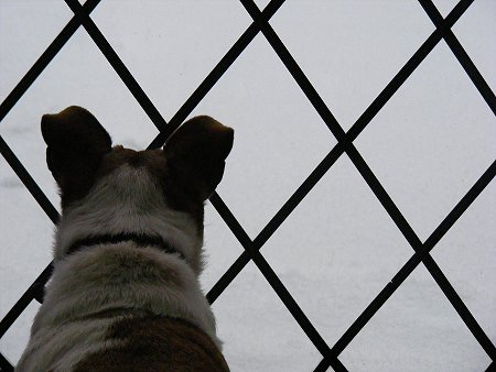 Dog-Dog watching the snow in Dublin, Ireland