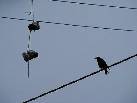 A pair of runners and a rook, up on the wires of Dublin