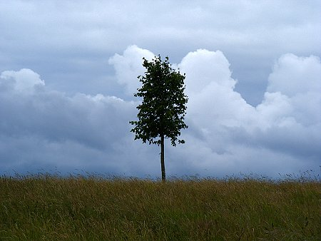 A small tree, somewhere in Ireland
