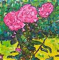 Severne Road Roses